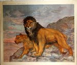 Poster  The Wild Animals  Lion and Lioness of Atlas of Africa Henry Baudot  circa  1900